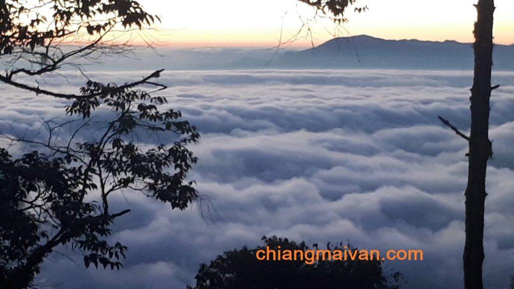 รถตู้เชียงใหม่ chiangmaivan พาชมทะเล หมอก ที่อ่างขาง